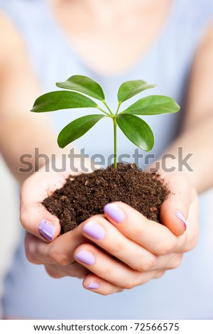 The plant is in the hands of a girl - stock photo