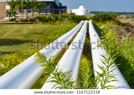 stock-photo-the-plant-with-yellow-flower