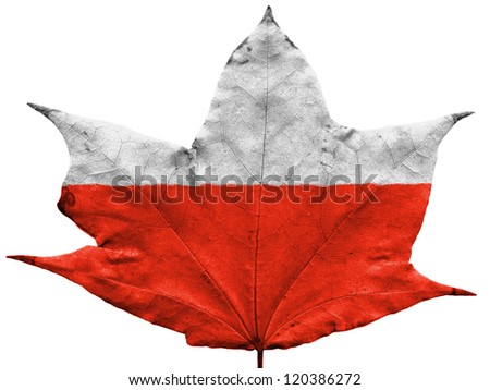 The Polish flag painted on dried autumn leaf - stock photo