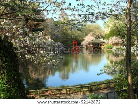 The pond at the Japanese Garden in the Brooklyn Botanical Gardens seen through blossoming trees - Brooklyn, New York