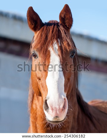 The Portrait of a happy smiling chestnut horse - stock photo