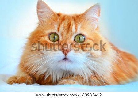 The portrait of red cat - stock photo