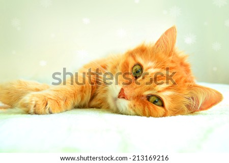 The portrait of red cat on a white background with snowflakes - stock photo