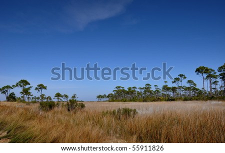 The Prairie Landscape. Dunes of St. George Island State Park, Florida,