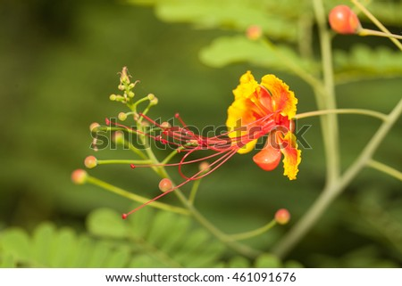 Yellow flower dew fresh morning stock photo 532257787 shutterstock - Flowers that bloom all year round ...