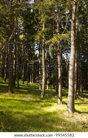 The primeval forest with grass on ground - stock photo