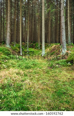 The primeval forest with mossed ground-HDR  - stock photo