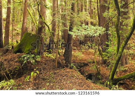 The primeval forest with mossed stump - stock photo