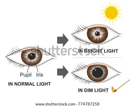 Pupillary Light Reflex Dark Room