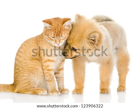 the puppy licks a cat. isolated on white background - stock photo
