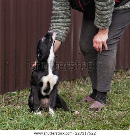 The puppy of dark color sits on a grass and looks at the person - stock photo