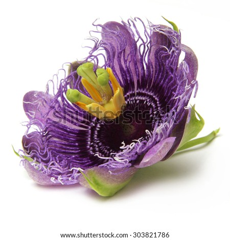 The purple passionflower isolated on white background - stock photo