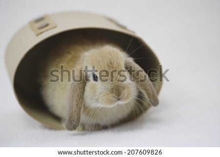 The Rabbit Holding Its Face Out From A Box