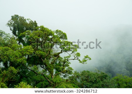The rainforest with mist - stock photo