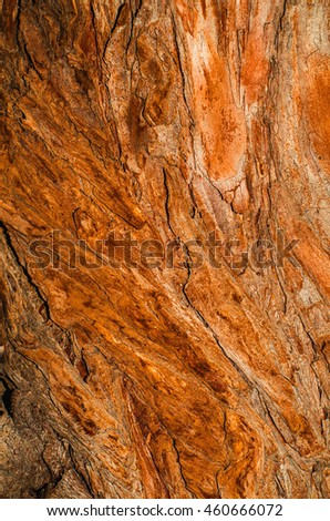 The raw texture and shapes of nature / Nature background / The bark, trunk and wood from natural tree in natural colors and colorized for abstract purposes