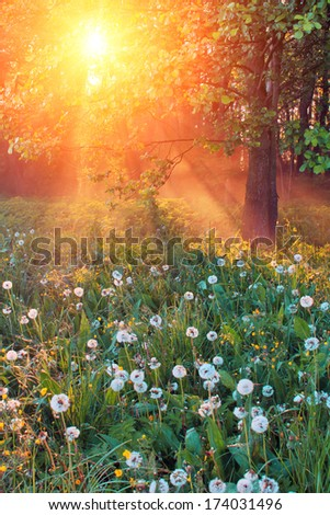 The rays of dawn sunlight pass through the mist of dawn in the woods - stock photo
