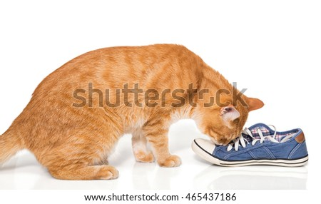 The red cat sniffing shoes, isolated on white