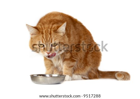 The red cat with orange eyes licks lips on a meal - stock photo