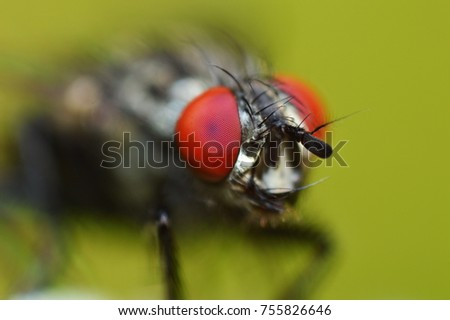 Compound eyes of house fly pictures