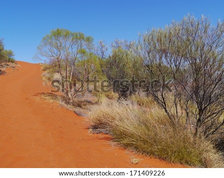 The red dunes with desert vegetation in the northern territory in Australia - stock photo