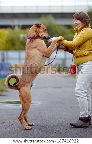 The red not purebred dog costs on the road. Not purebred dog. Doggie on walk. The large not purebred mongrel. - stock photo