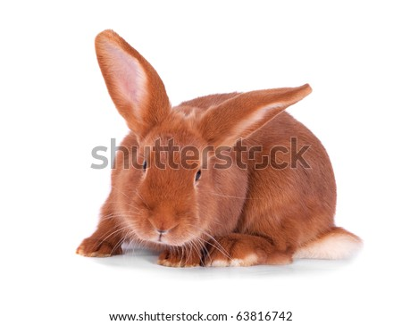 The red rabbit on a white background - stock photo