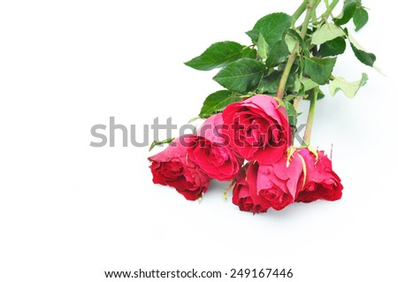 The red rose for Valentine's day - stock photo