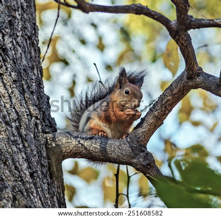 The red squirrel sitting on a tree in a moscow Izmailovsky park - stock photo