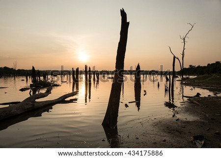 The reflection image of dead trees and dry wood in the lake. - stock photo