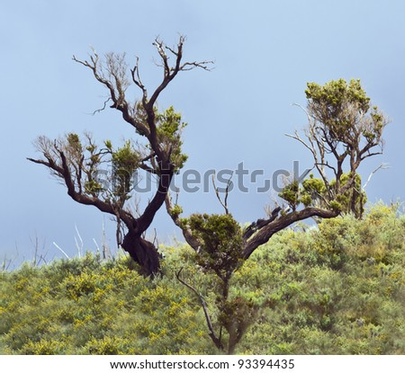 The remnants of forests on the slope of mount Kilimanjaro - Tanzania - stock photo