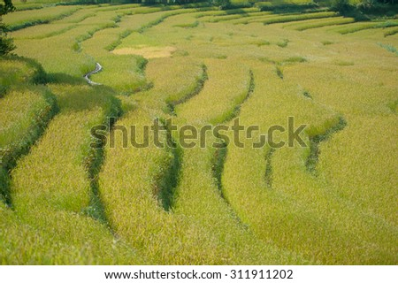 The rice field in the small village, the way to Manang, Nepal