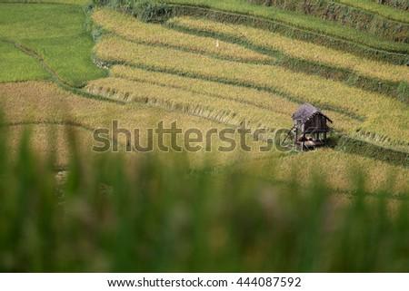 The rice terrace farm - stock photo