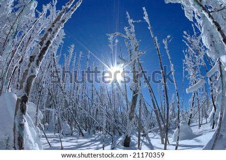 The rime on trees which shines for backlight - stock photo