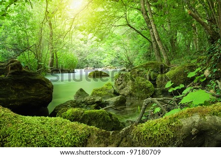 The river in the forest - stock photo