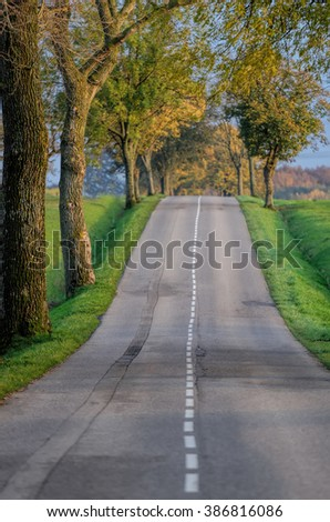 the road and the trees