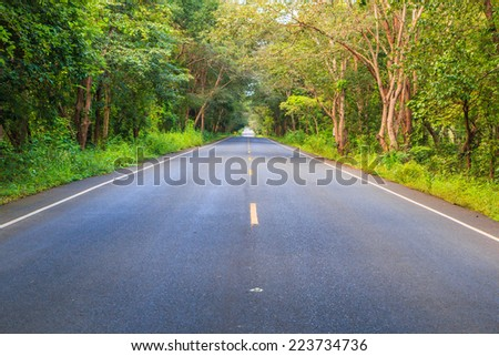 The road and tunnel of green trees on road