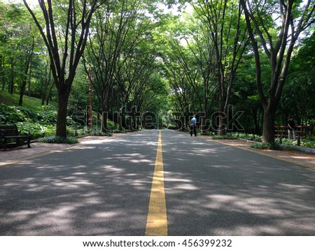 The road between trees in the botanical garden/Road between trees - stock photo