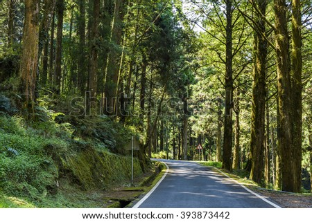 the road in green forest