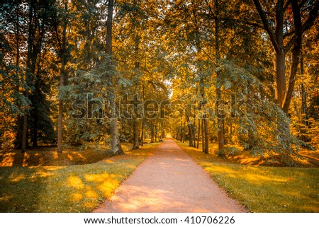 The road in the forest of Saint-Petersburg, Russia