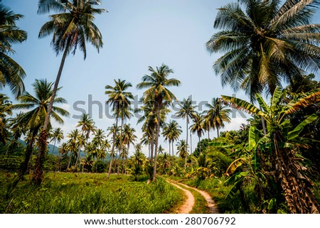 The road in the jungle. Palm trees and sky. Background - stock photo