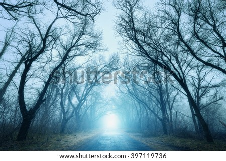 The road passing through scary mysterious forest with blue light in fog in autumn. Magic trees. Nature misty landscape