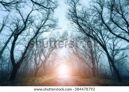 The road passing through scary mysterious forest with red light in fog in autumn. Magic trees. Nature misty landscape