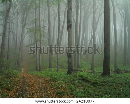 The road through beech forest. - stock photo