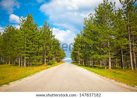 The road through the forest on the slopes of Zlatibor mountain, Serbia. Zlatibor is one of the most beautiful mountains in Serbia.  - stock photo
