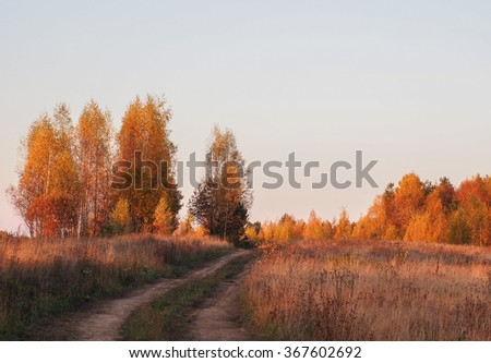 The road through the gold autumn forest - stock photo