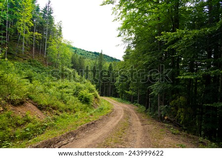 The road through the wood, Carpathians - stock photo