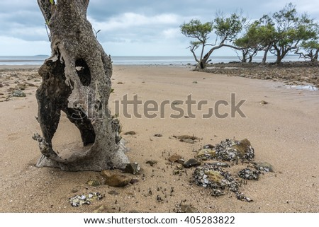 the rocky foreshore of the main beach - australia