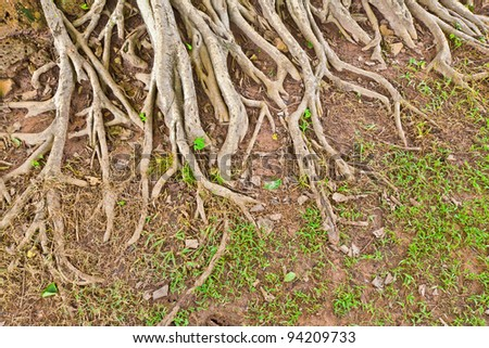 The root of a big tree and some grass on the ground - stock photo