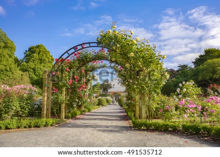 The rose garden in summer, Hagley Park, Christchurch, New Zealand.