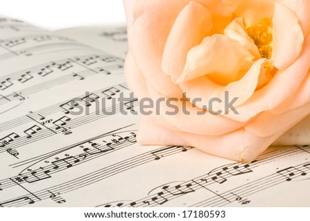The rose laying on a musical notes on a white background